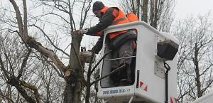 Elagage des branches sous les câbles aériens