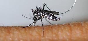 Lutte contre la prolifération du moustique tigre dans le Val-de-Marne